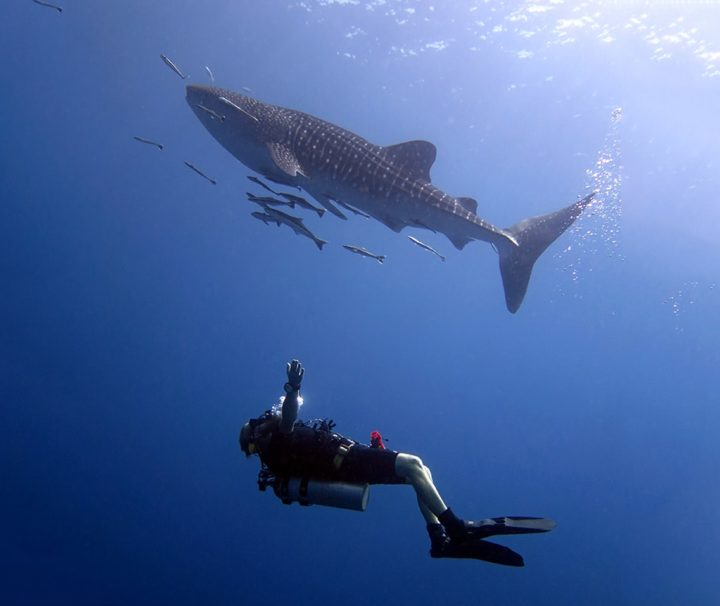 tauch touren koh chang thailand bb divers