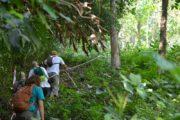 berg-koh-chang-wandern-dschungel-trekking-insel-thailand
