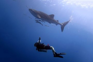 tauch touren koh chang thailand bb divers